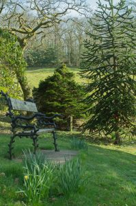 An ornate bench and the fabulous monkey puzzle tree