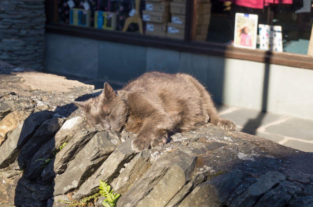 Cat on a wall in Hawkshead