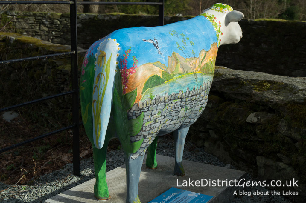 Go Herdwick sheep at Rydal Hall