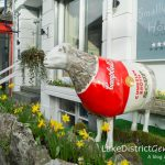 Spotted 'ewe'! The Go Herdwick Lake District sheep trail