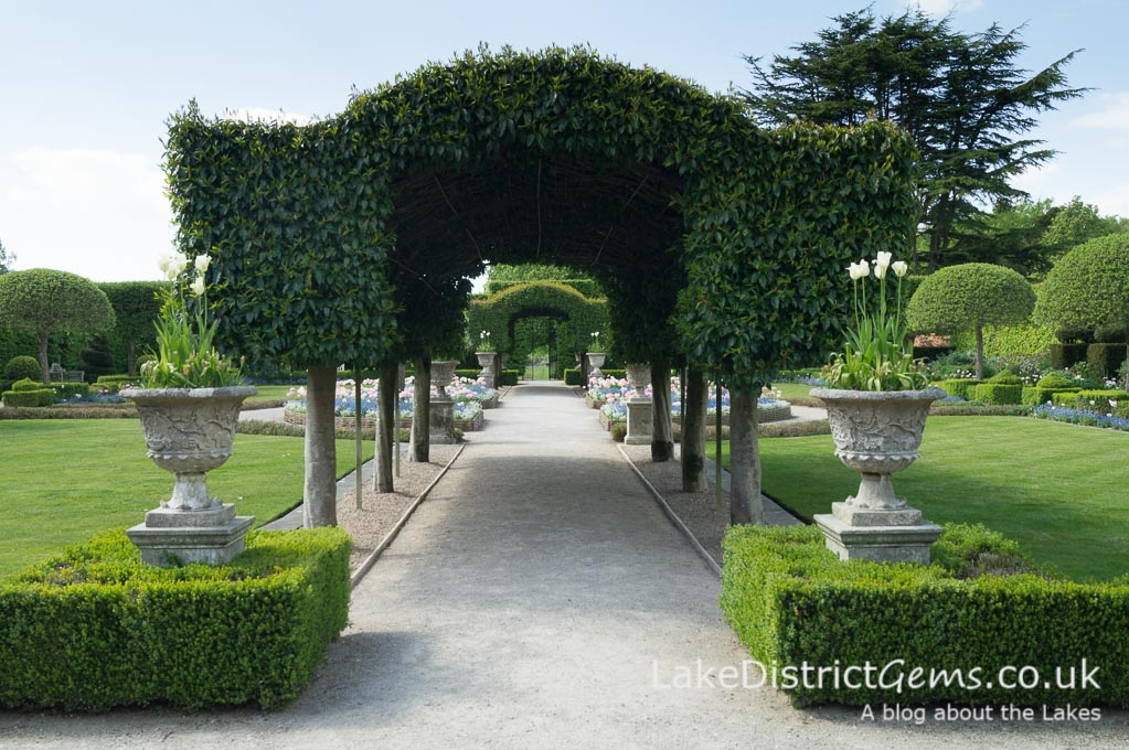 The Portuguese Laurel arches in the Summer Garden
