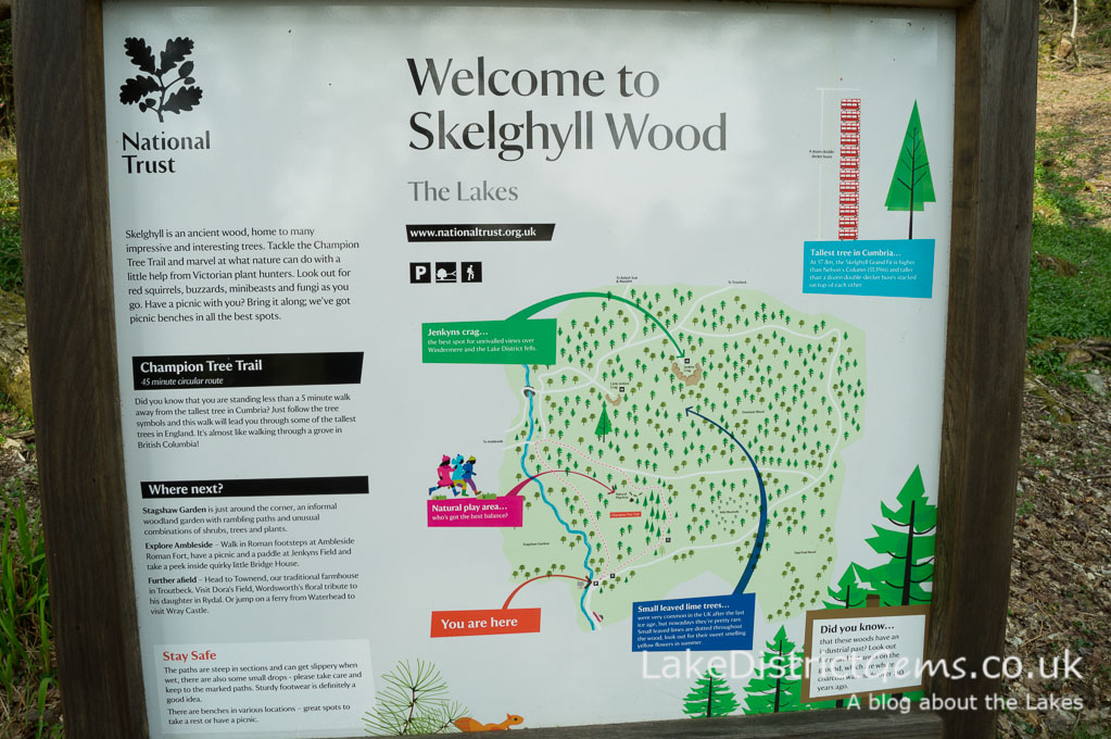 National Trust Skelghyll Wood