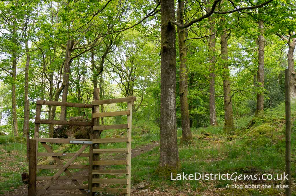 The gate from Stagshaw Gardens to Jenkins Crag