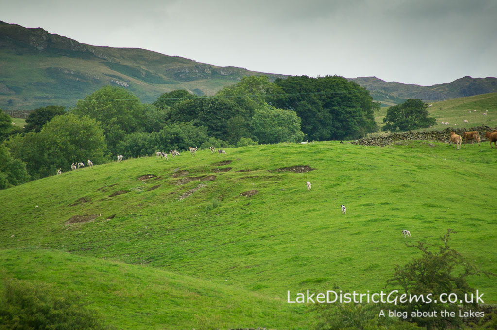 Hounds in the distance at the Lake District Sheepdog Trials