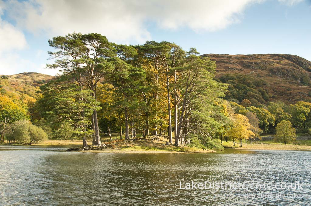 Trees on Coniston Water