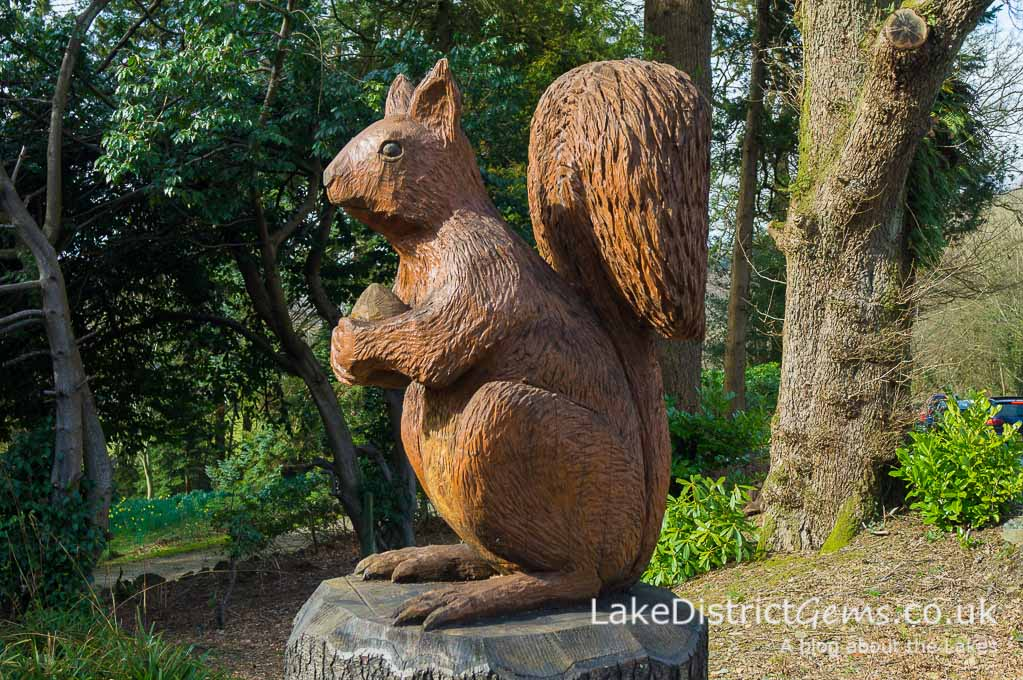 A famous Lakeland squirrel, but where is he? Part of my November Lake District quiz