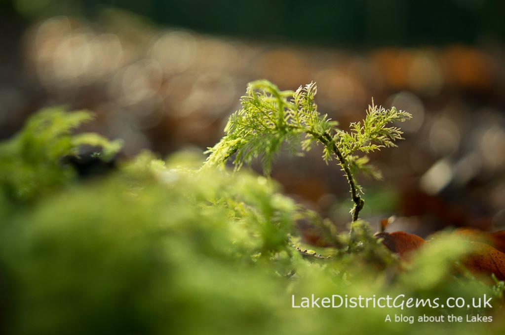Moss which looks like a Bonsai tree