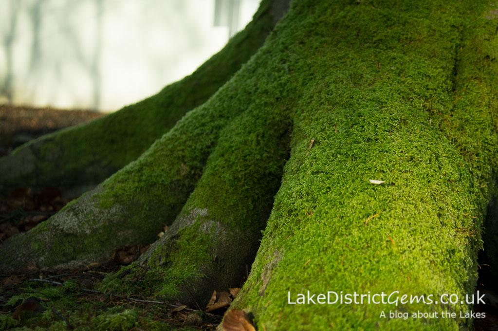 Macro image of moss on a tree