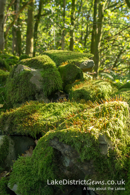 Moss on a stone wall