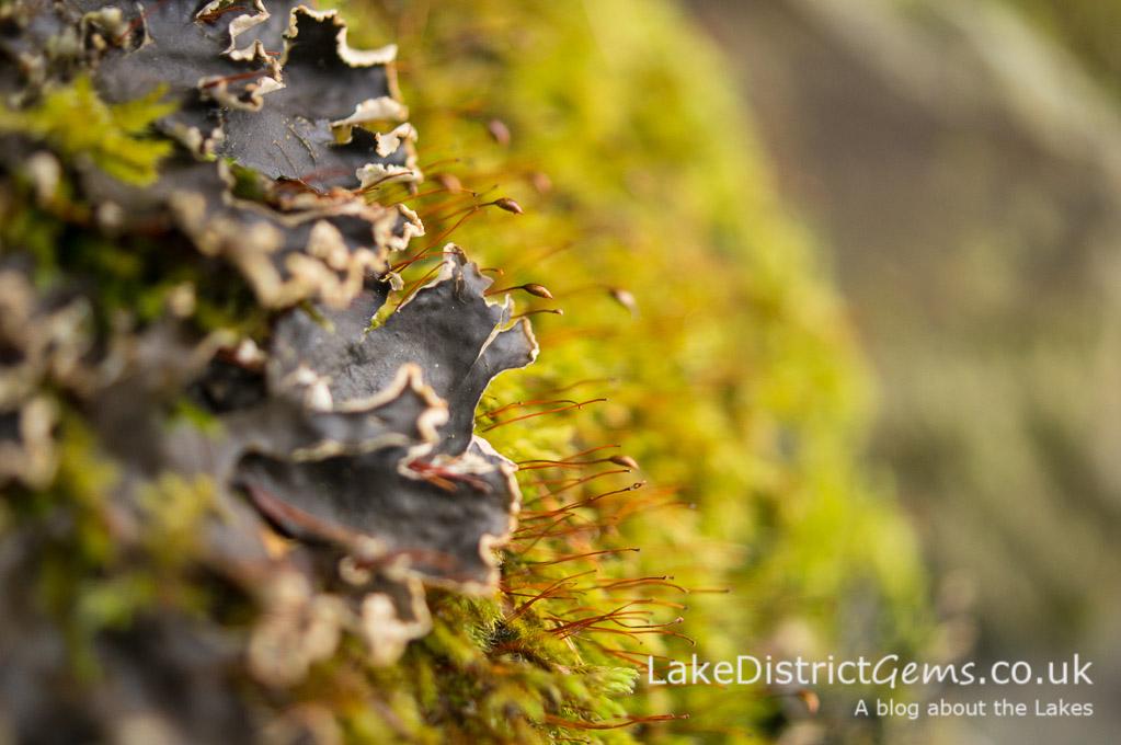 Macro image of moss