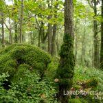 The amazing miniature world of moss