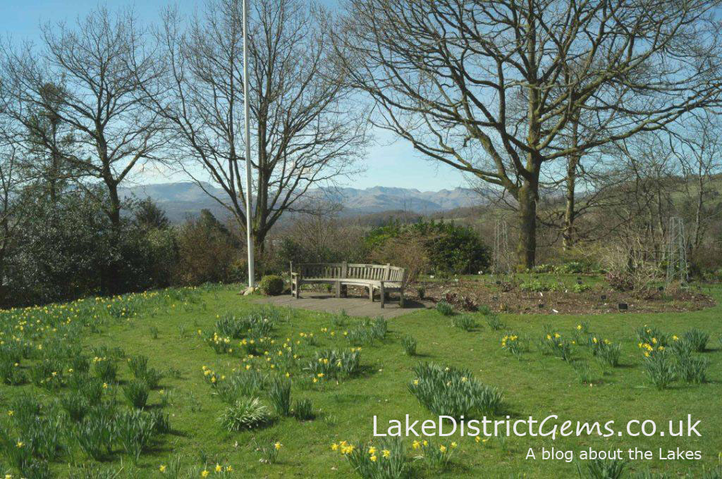 The daffodils at Holehird near Windermere