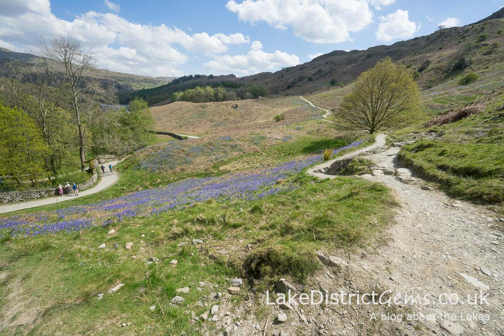 Paths above Rydal Water