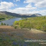 The bluebells of Loughrigg Terrace