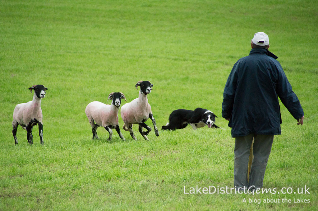 The Lake District Sheep Dog Trials event at Ings in August