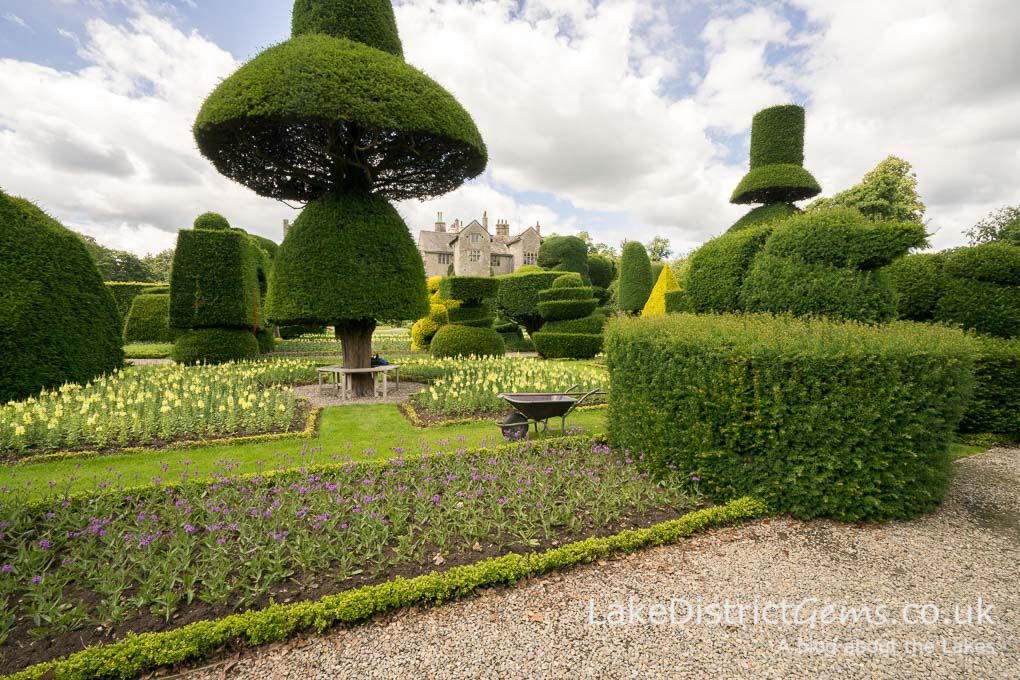 Levens Hall and one of the two 'umbrellas' in the topiary garden