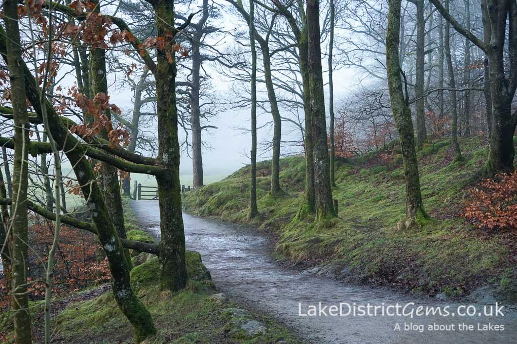 The path through woodland near Skelwith Bridge