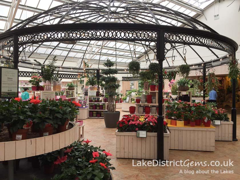 The indoor plants