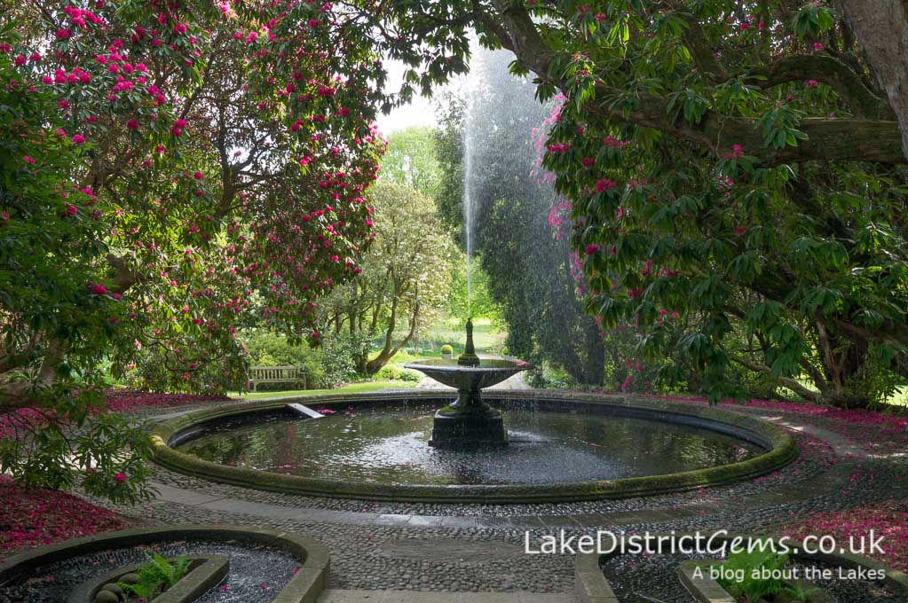 The rhododendrons surrounding the Cascade feature at Holker Hall