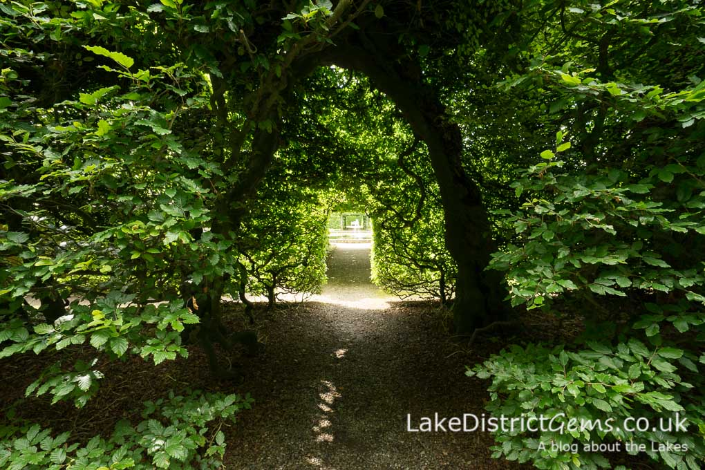 The beech hedges at Levens Hall